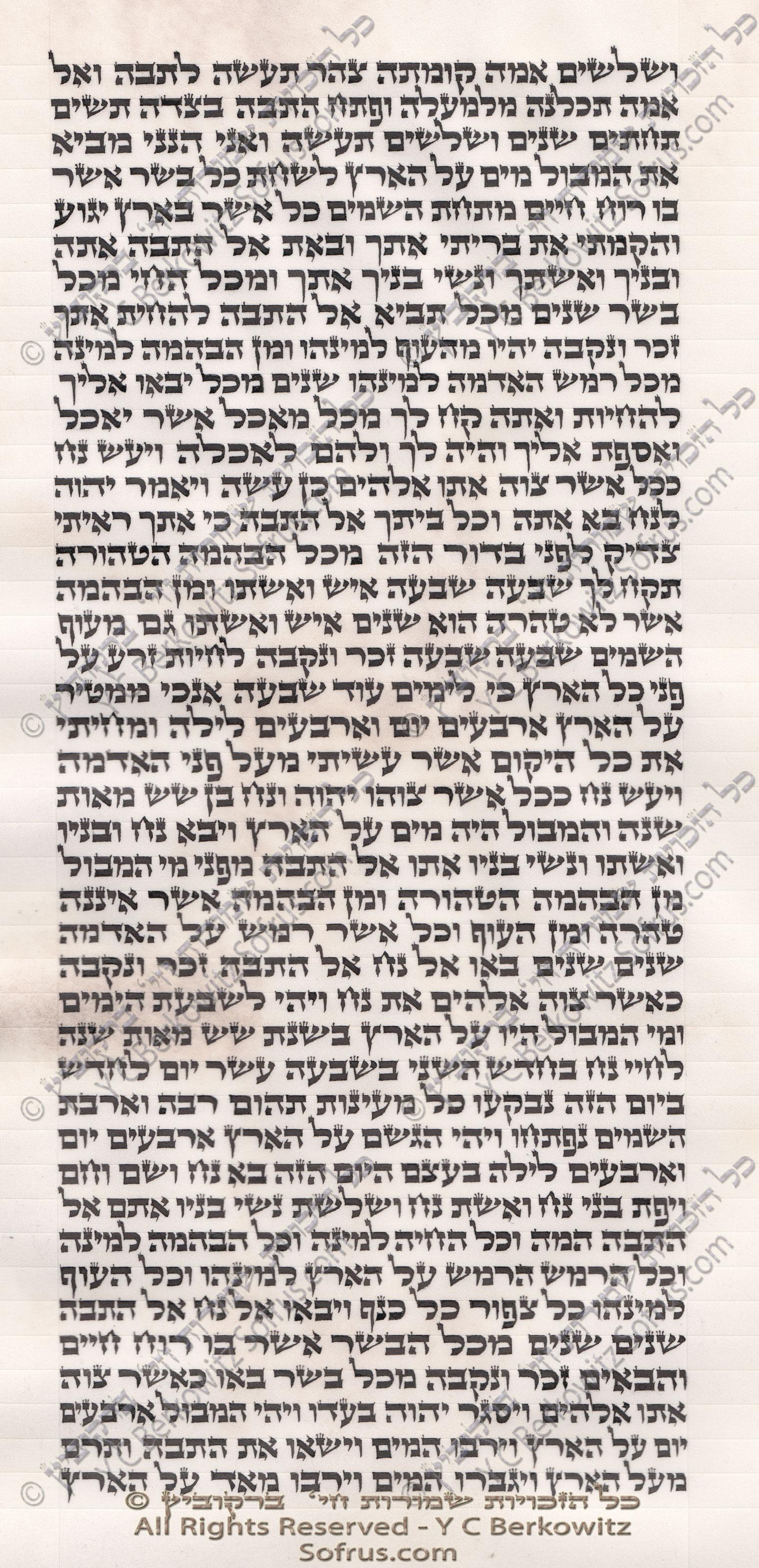 sefer-torah-noach-7